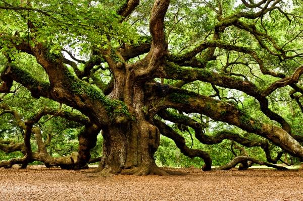 martinweigel_tree
